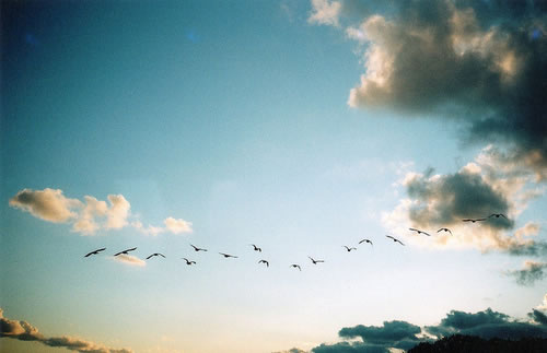 飞向那大海彼岸的天空 暖暖意境唯美风景QQ空间素材