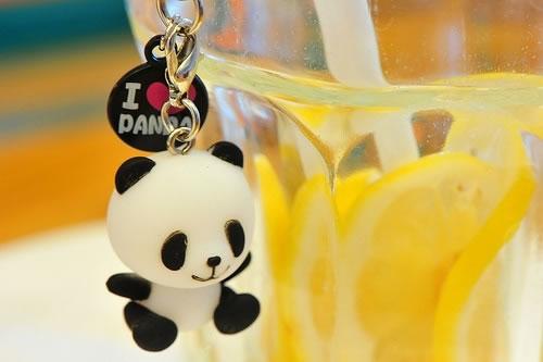 熊猫龙猫kitty都是猫_温馨可爱的qq空间素材