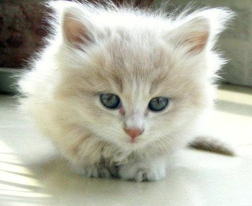 超萌可爱猫咪qq空间图片素材