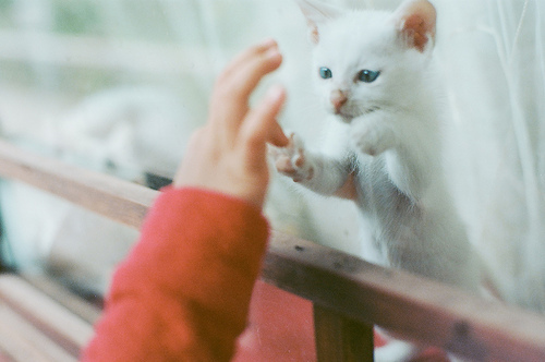 qq图像可爱小猫咪