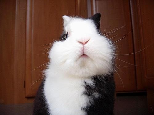 可爱兔兔图片,可爱小猫图片