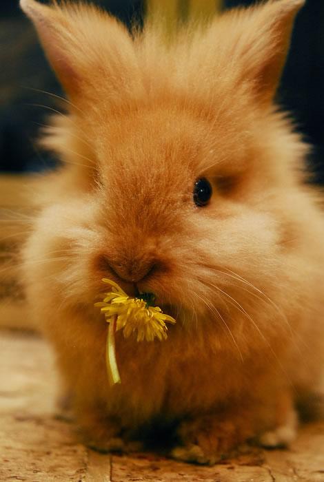 猫咪+兔兔素材图片_可爱动物图