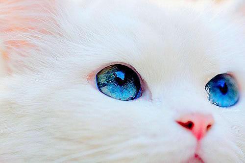 动物+兔兔素材图片_可爱图片图_QQ下载网了集合微表情包信猫咪图片