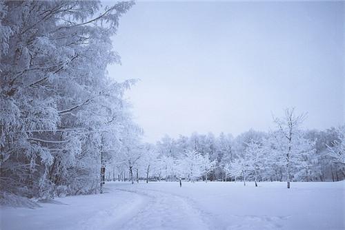 手机壁纸雪景伤感