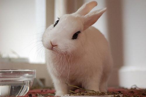 兔年吉祥素材图片_可爱的真兔子空间素材