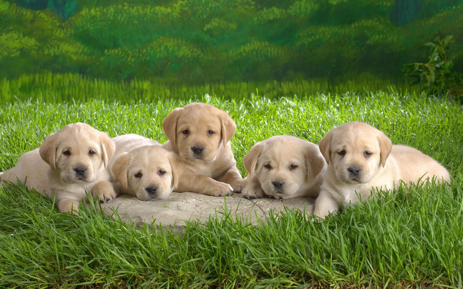 五只小狗 宽屏壁纸_qq下载网